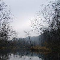 Река Тура :: Сергей Комков
