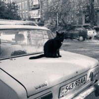Кот и машина :: Marina Kutsenko