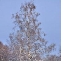 Старожило леса :: Николай Мальцев