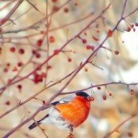 Редкая птица в городе :: Юрий Неганов
