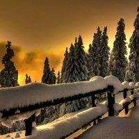 Зимовый лес :: Den Mihailow