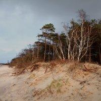Осенние пески :: Сергей Белушкин