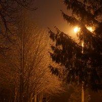 Вечерняя прогулка :: константин чувилин