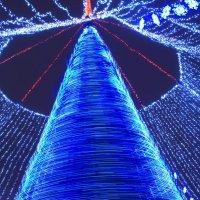 Новогодняя елка в Белгороде :: константин чувилин