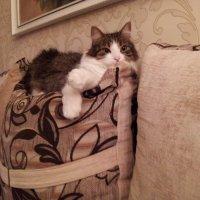 Кошка :: Маргарита Степанчук