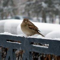 Птичка*_* :: Ильназ Габбасов