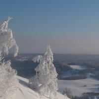 Морозный день :: Алексей Семеняк