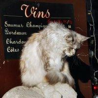 Монмартрский кот :: Марина Витушкина