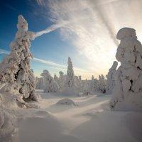 Морозно :: Владимир Кочкин