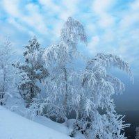 Ежовая гора :: Алиса Ольховская
