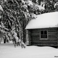 Старый дом в лесу :: Александр Маликов