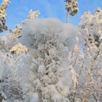 Снежок :: Сергей Угренев