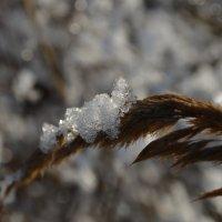 Начало зимы :: Андрей Бельский