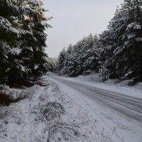 Дорога в Карамышево :: Андрей Бельский