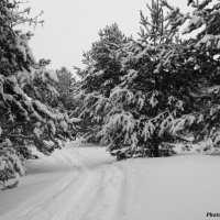 Заснеженный лесю :: Александр Маликов