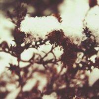 снежок :: Ева Вейт