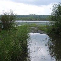 Озеро Белоусово :: Сергей Комков