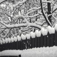 В ритме снега :: antip49 antipof