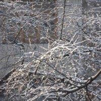 зима пришла в наш тихий дворик... :: Валентин Гордиенко