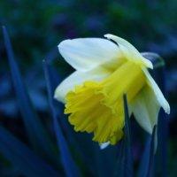 Цветы :: Мария Юртаева