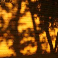 Тень :: Мария Юртаева