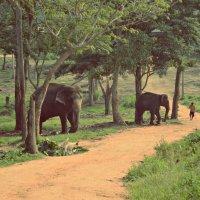 Парк слонят :: Валентина Потулова