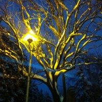 Волшебный фонарь :: Анастасия Ухач