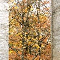 Окно в осень :: Наталия Зыбайло