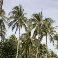 Вьетнамский рай :: Ekaterina Shchurina