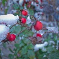 первый снег :: Женя Петров-Юкин