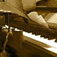 Звуки современной музыки :: Виталий Балан