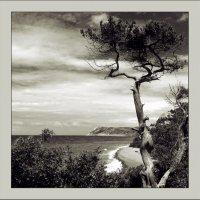 Вид на море вблизи Утриш :: Андрей Коптелов