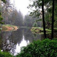 Лесной пруд :: Олег Сливанков