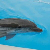 Delfin :: Olga Lumi