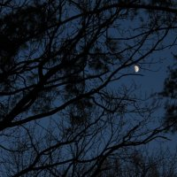 Луна :: Мария Юртаева