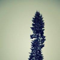 дерево :: Zlata Tsyganok