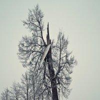 Зима :: Zlata Tsyganok