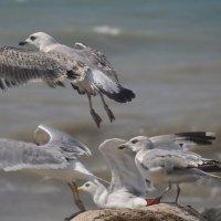 Чайки :: Денис Стукалин