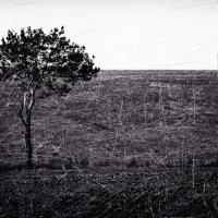 Одиночество сволочь... :: Владимир Ноздрачев