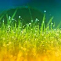 На траве роса... :: Владимир Ноздрачев