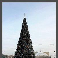 Ёлка новогодняя :: Наталья Золотых-Сибирская