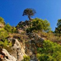 И на камнях ростут деревья :: Михаил Карпов
