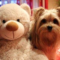 Маркуша со своим любимым Медвежонком :: Диана Вакуленко