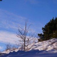 зима... :: Юлия Кулиева