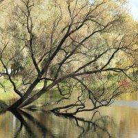 дерево :: Наталья Наталья