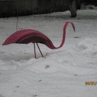 фламинго ))) :: Виктория Кудь