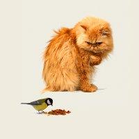 Милочка, тебе плохо не станет? Это же наш, кошачий корм! :: Анатолий Тимофеев