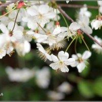 Вспоминая весну :: Марина Жилина