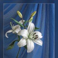 Распустились белой лилией чудесной... :: Luis-Ogonek *