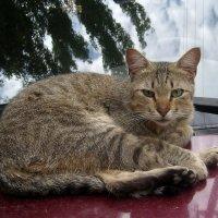 Сторожевой кот :: Dr. Olver